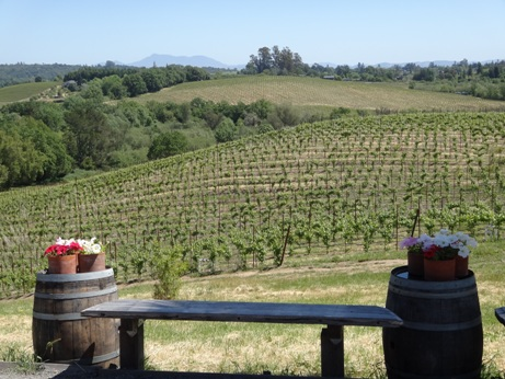Iron Horse Vineyards, pic by Ronda Bumgardner